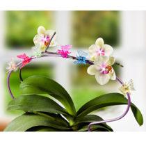 """Blancheporte 6 kvetinových klipsov """"Motýľ"""""""