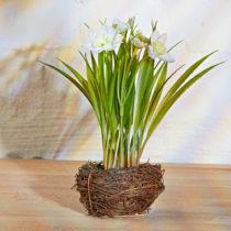 Blancheporte Narcisy v hniezde, žltá biela-žľtá