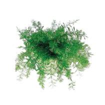 Blancheporte Neptúnova zázračná rastlina