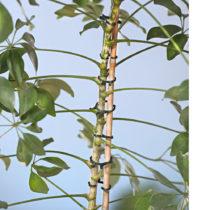 Blancheporte 24 klipsov na viazanie rastlín