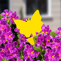 "Blancheporte 10 mucholapiek ""Motýľ"""
