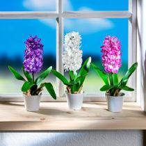 Blancheporte Hyacint v kvetináči, biela biela