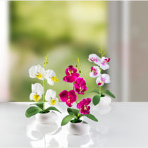 Blancheporte Trio orchideí