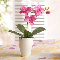 Blancheporte Orchidea, lila lila