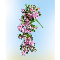 Blancheporte Závesná kytica azaliek, ružová ružová-biela
