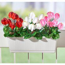 Magnet 3Pagen Kvety do hrantíka Cyklámeny