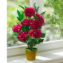 Magnet 3Pagen Izbová rastlina