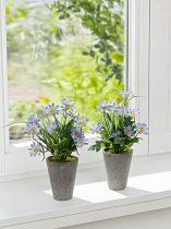 Magnet 3Pagen 1 rastlina v kvetináči + 1 ZDARMA