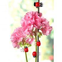 """Magnet 3Pagen 8 klipsov na kvety """"Lienka"""""""