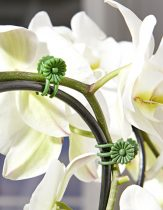 Magnet 3Pagen 30 klipsov na kvetiny