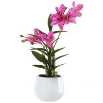 Orchidea Japanorchidee I