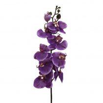 Orchidea Phalänopsis Gundula